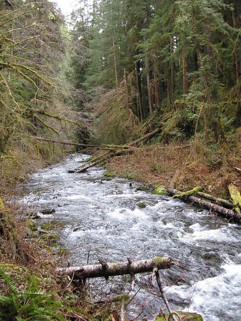OlympicNP 0055